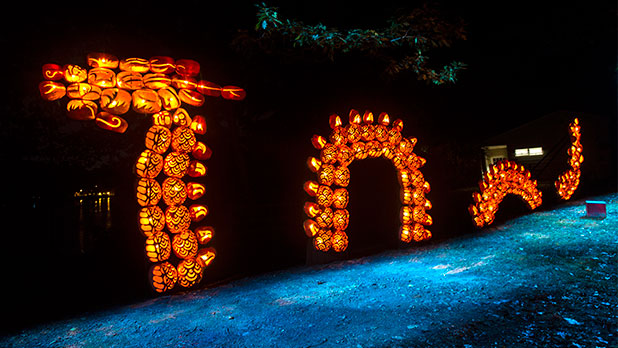 The Great Jack O'Lantern Blaze - Photo Courtesy of Historic Hudson Valley by Tom Nycz