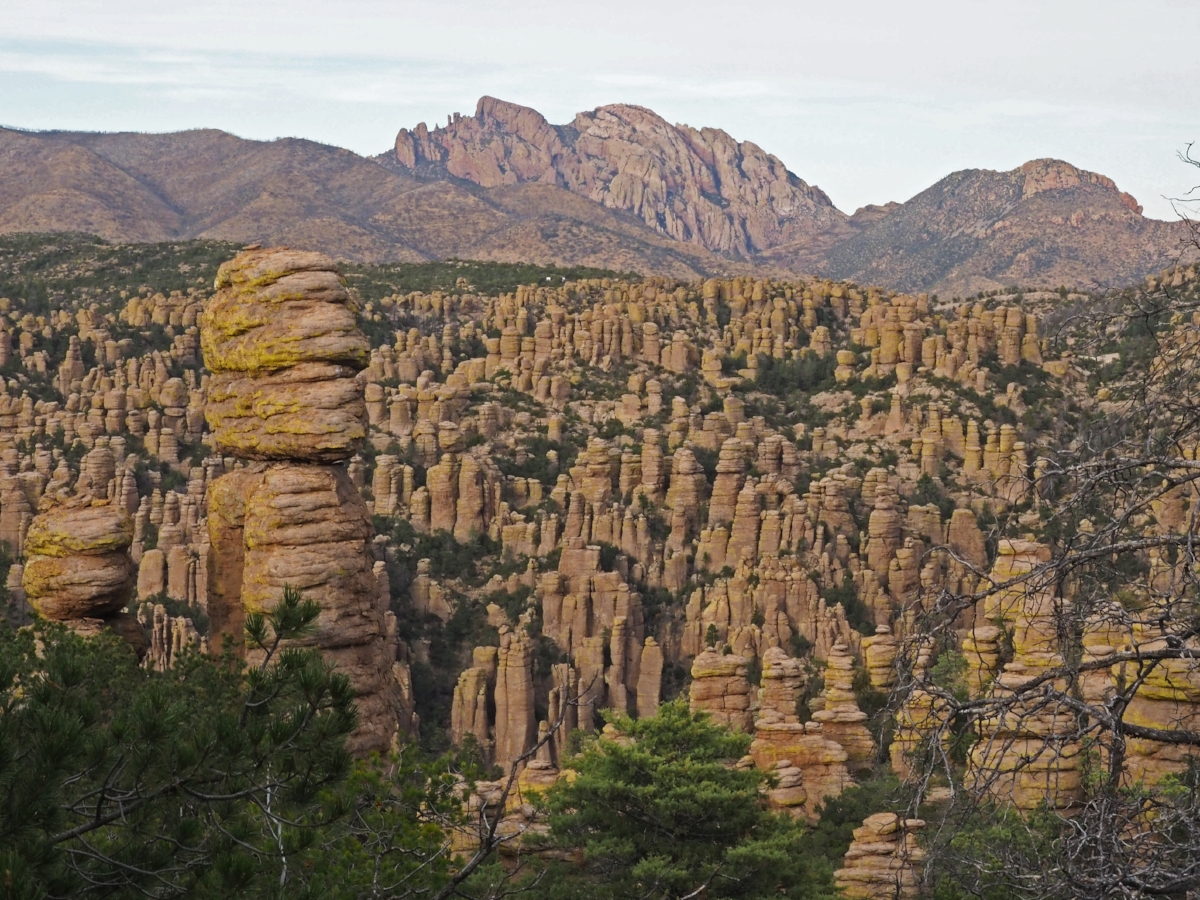 Chiracahua Mountains