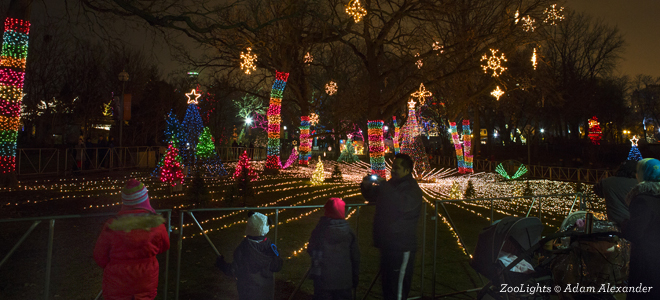 christmas lights in chicago holiday tours choose chicago - Local Christmas Lights Displays