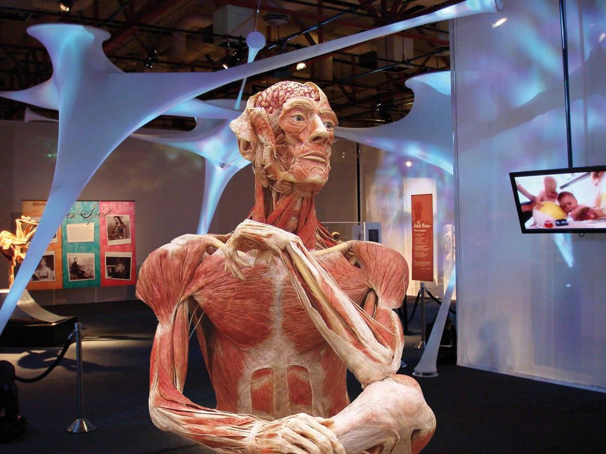 Gunther von Hagens\' BODY WORLDS & The Story of the Heart at the ...