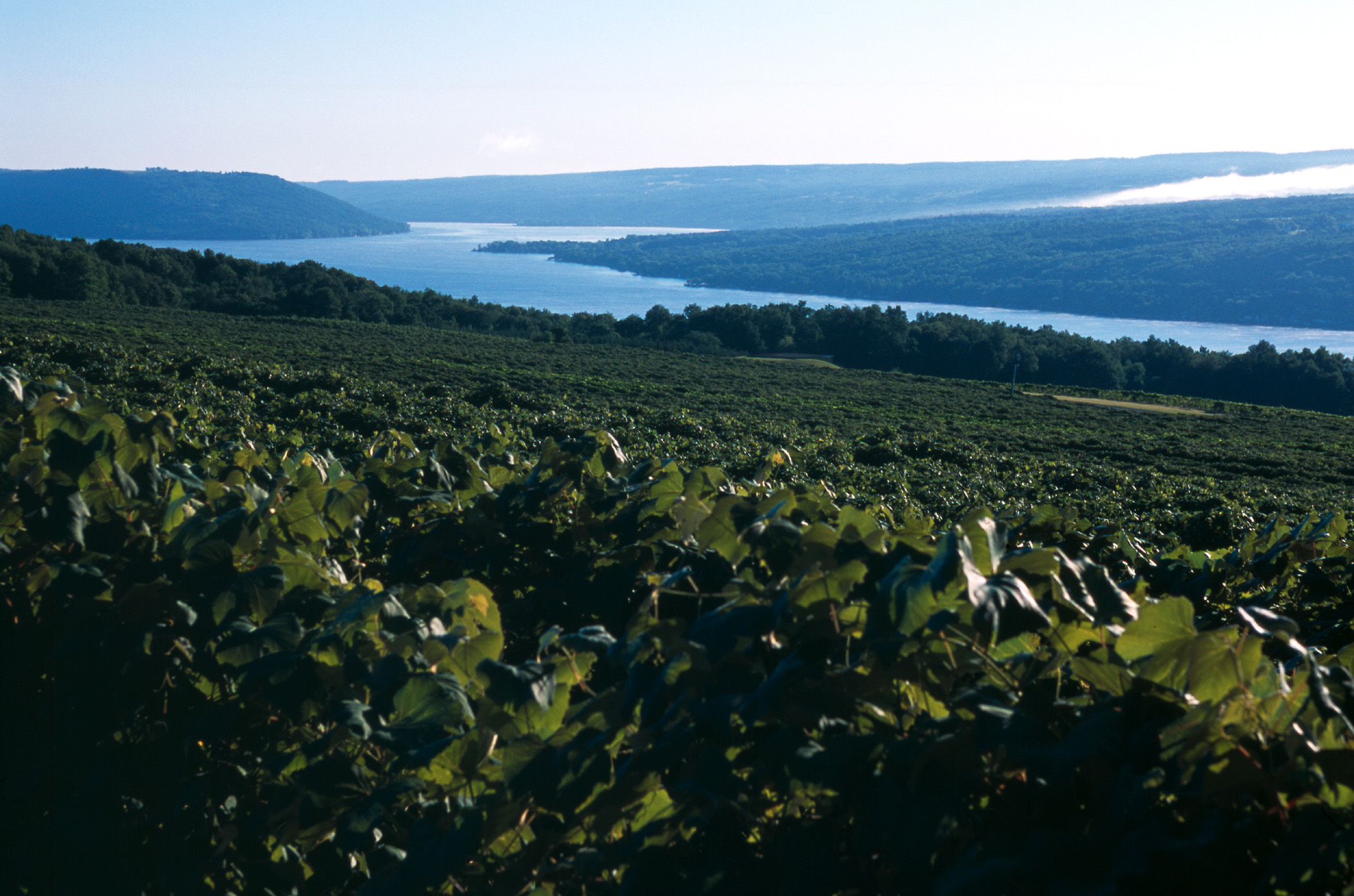 I love new york invites you to explore the finger lakes region on keuka lake a drive along the keuka lake wine trail is filled with stunning scenery great new york state sciox Images
