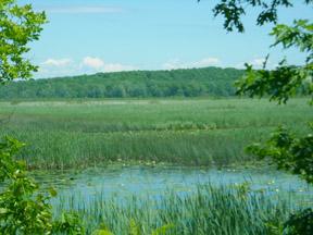 Deer Creek Marsh, new brochure now available