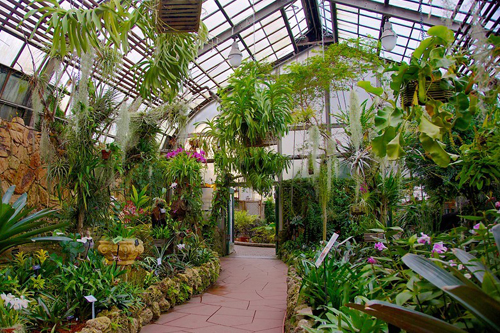 Lincoln Park Conservatory The Orchid Room