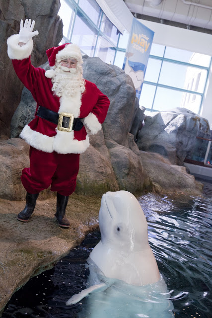 Santa with Beluga whale - Shedd - Blog