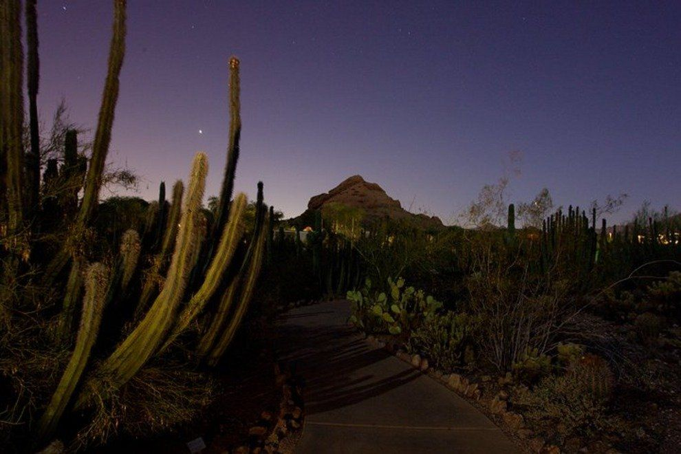 Desert Botanical Garden evening