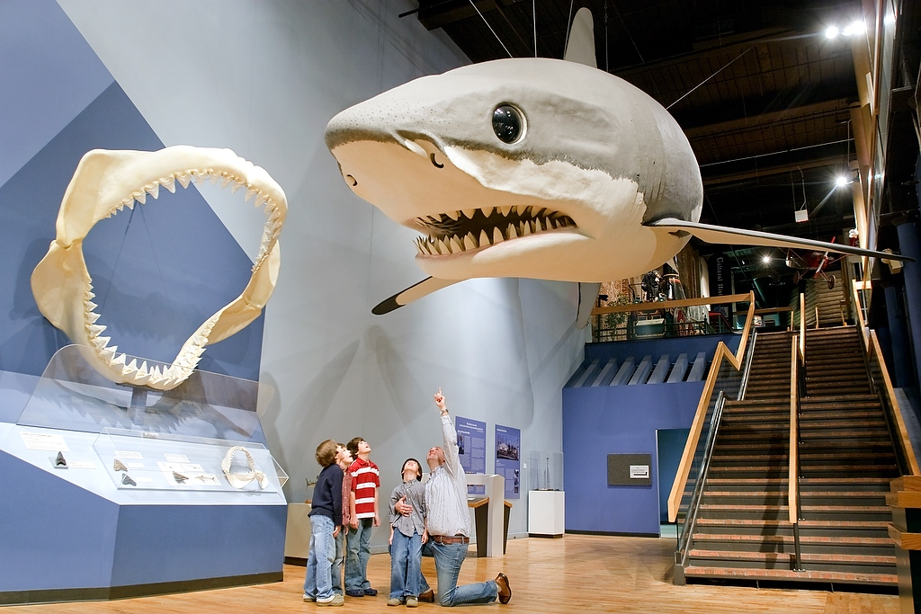 The giant shark at the South Carolina State Museum is a megalodon, a pre-historic shark.