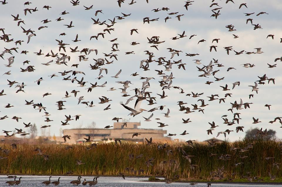 Oak Hammock Marsh Migration Dinner