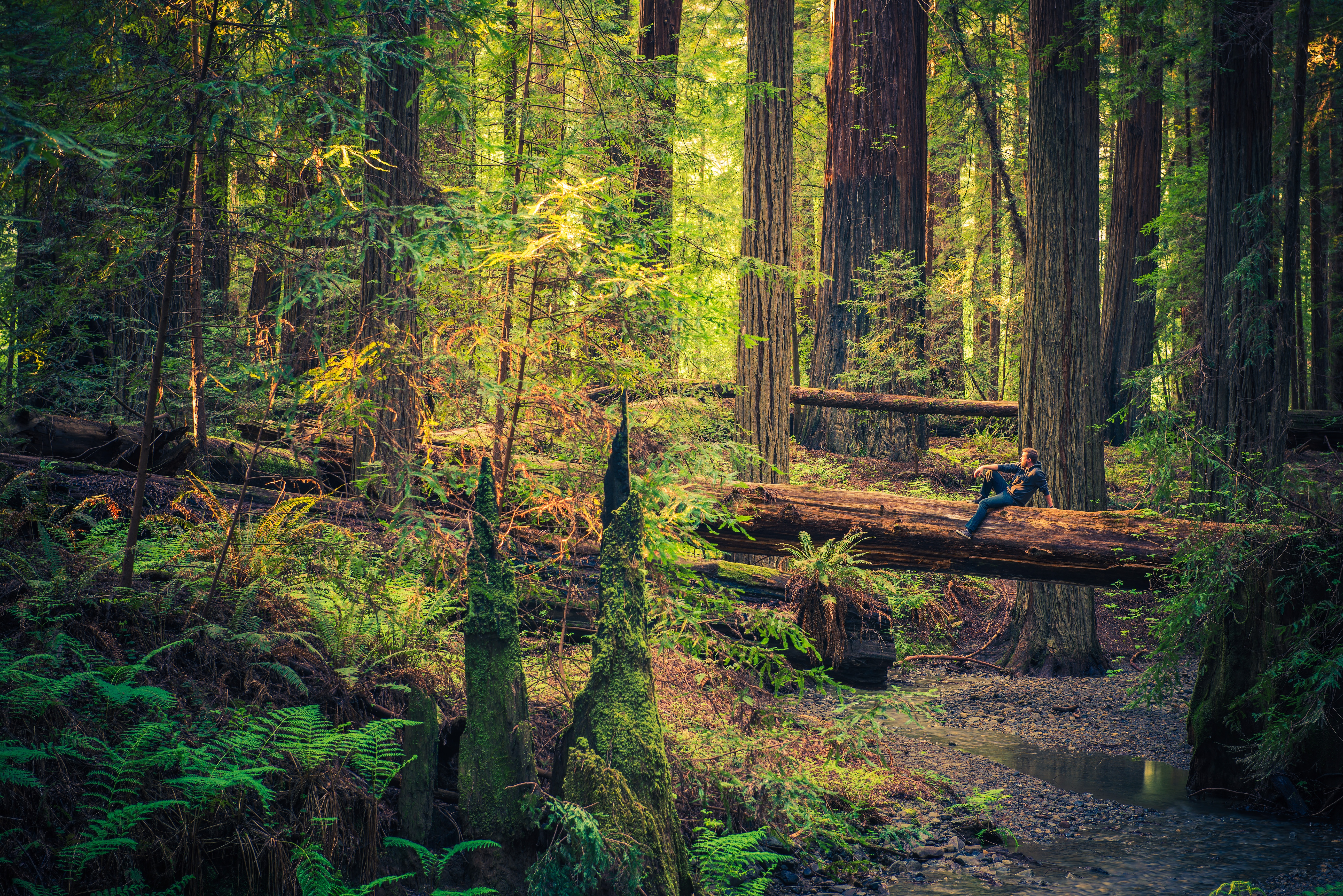 Travel Info for the Redwood Forests of California, Eureka and ...
