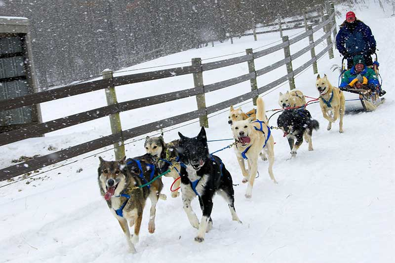 Dog Sledding in the Laurel Highlands
