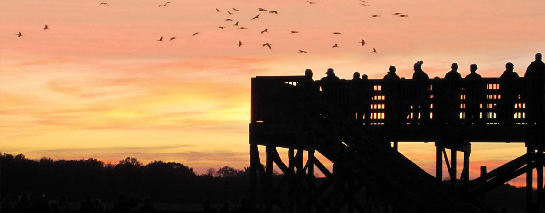 Spring Is In Air Cranes Are Returning >> Sandhill Cranes Indiana Migration Information Viewing