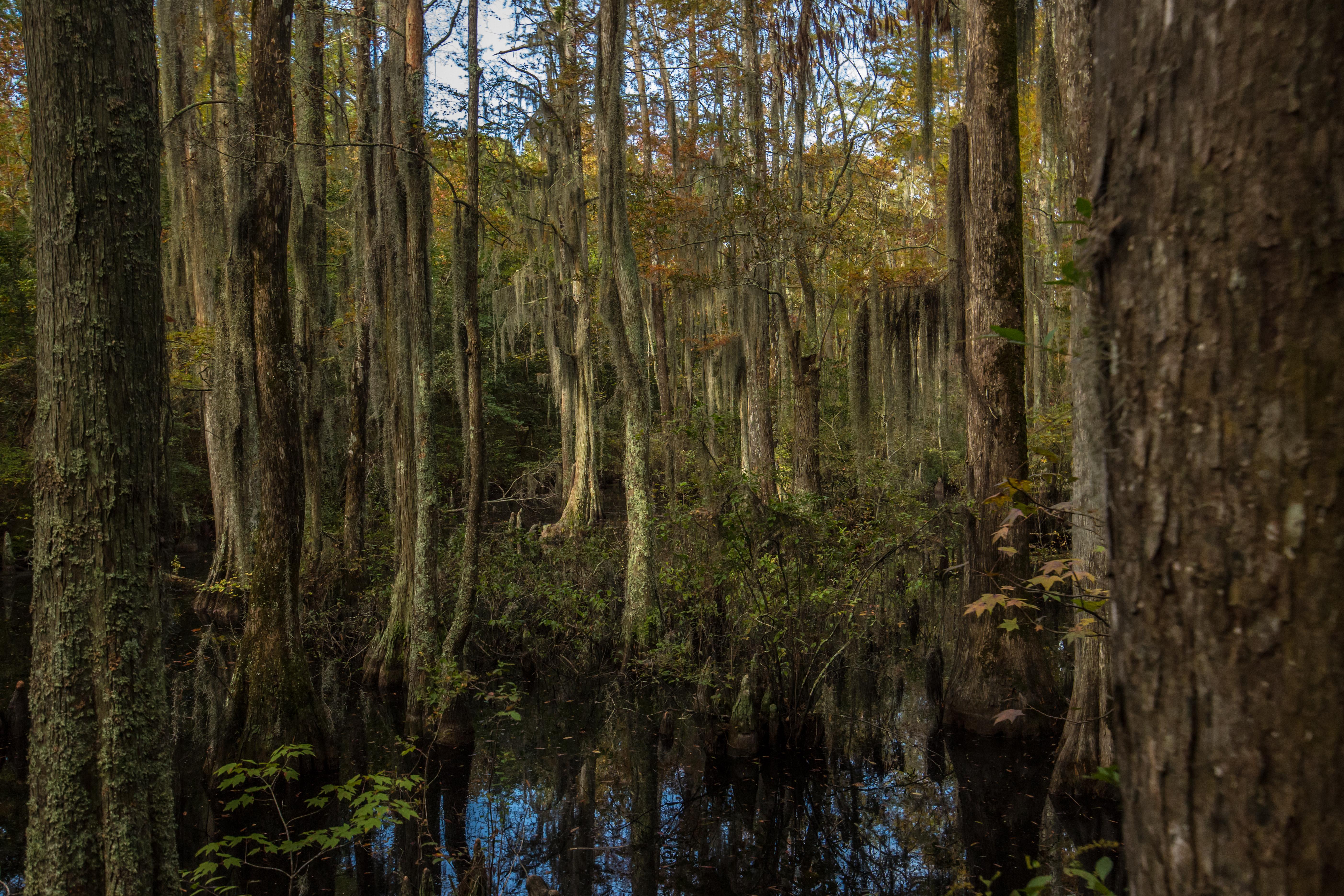 Virginia Beach's First Landing State Park Cypress Swamp