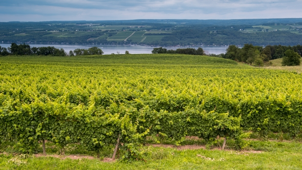 Lakewood Vineyard on Seneca Lake