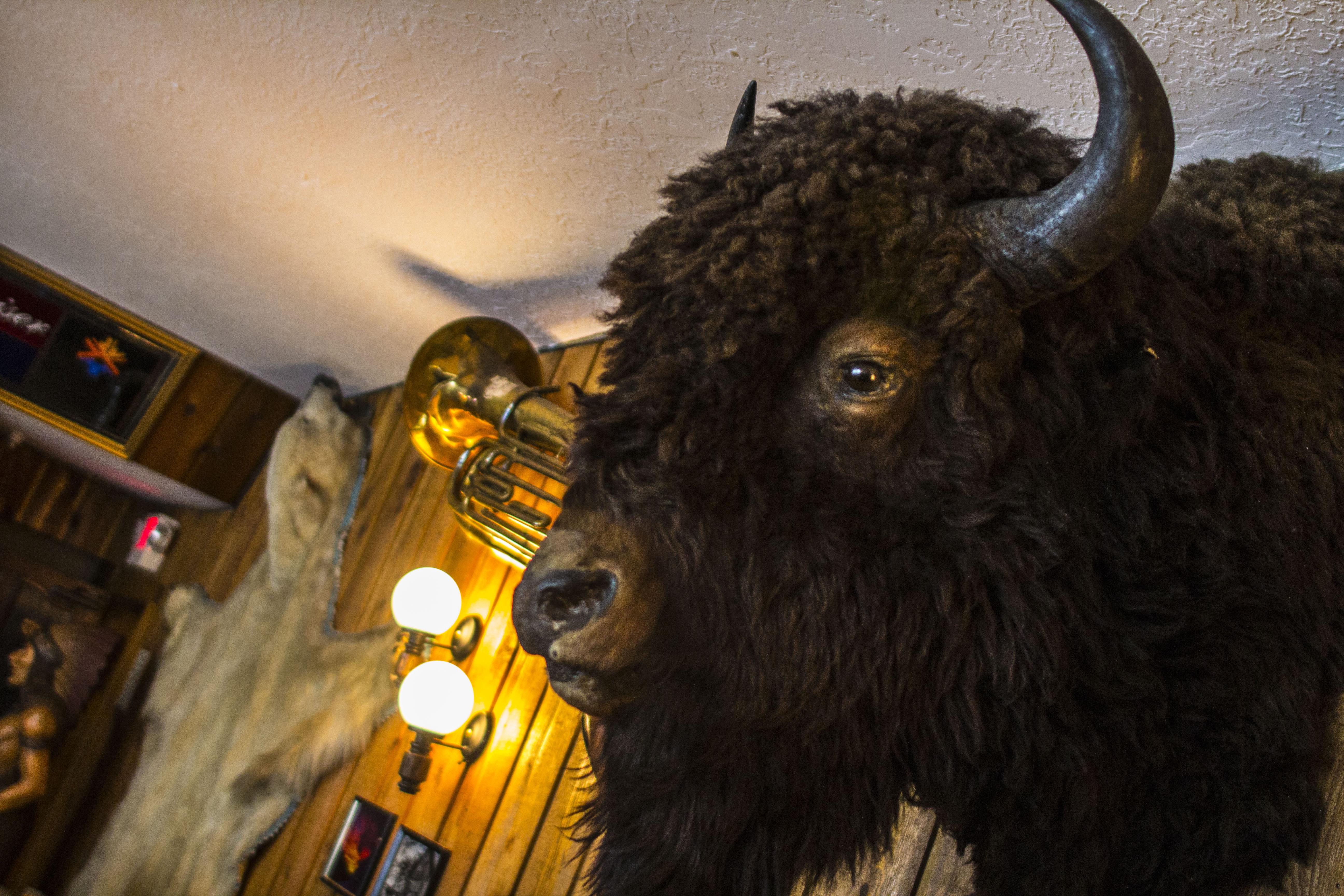 Midvale Heights Bison Celebrate >> Alta Peruvian Lodge Bar Alta Ski Area Ut Ski City