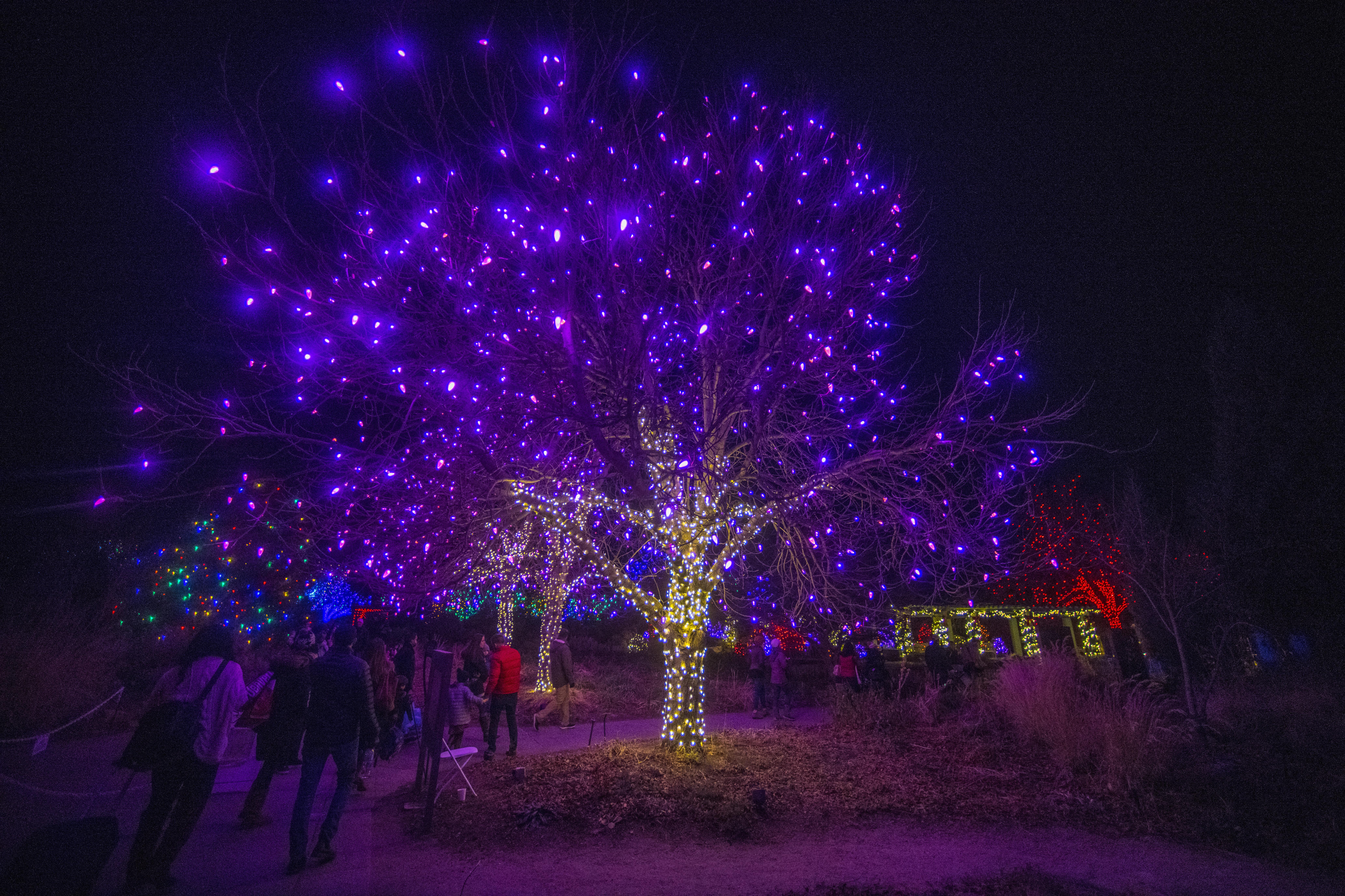 Denver Holiday Lights Visit Denver