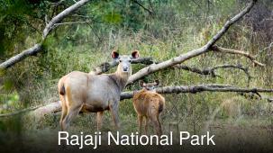 Leisure Hotels  The Forrest Rajaji National Park Resort