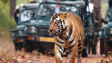 Tiger Camp Resort, Corbett Uttarakhand Corbett Jeep Safari