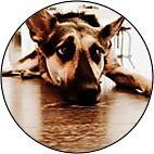 bammdog