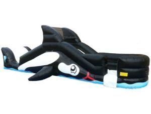 Whale Slide