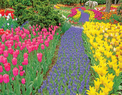 Trail of Blooms 500 Piece Jigsaw Puzzle