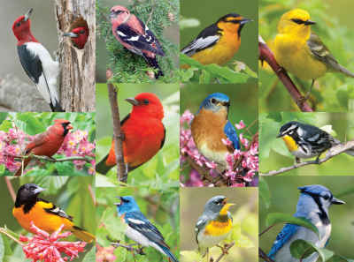 Birds of a Feather 500 Piece Jigsaw Puzzle