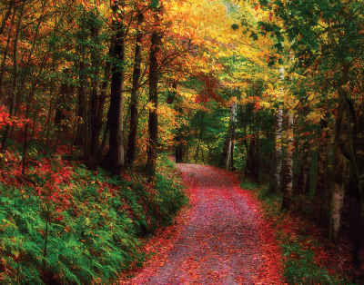 Crimson Road 1000 Piece Natural Delights Jigsaw Puzzle