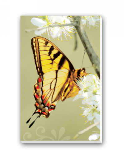 Butterflies Bridge Tally Sheets Playing Cards Accessory