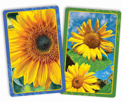 Sunflowers Jumbo Print Index Playing Cards