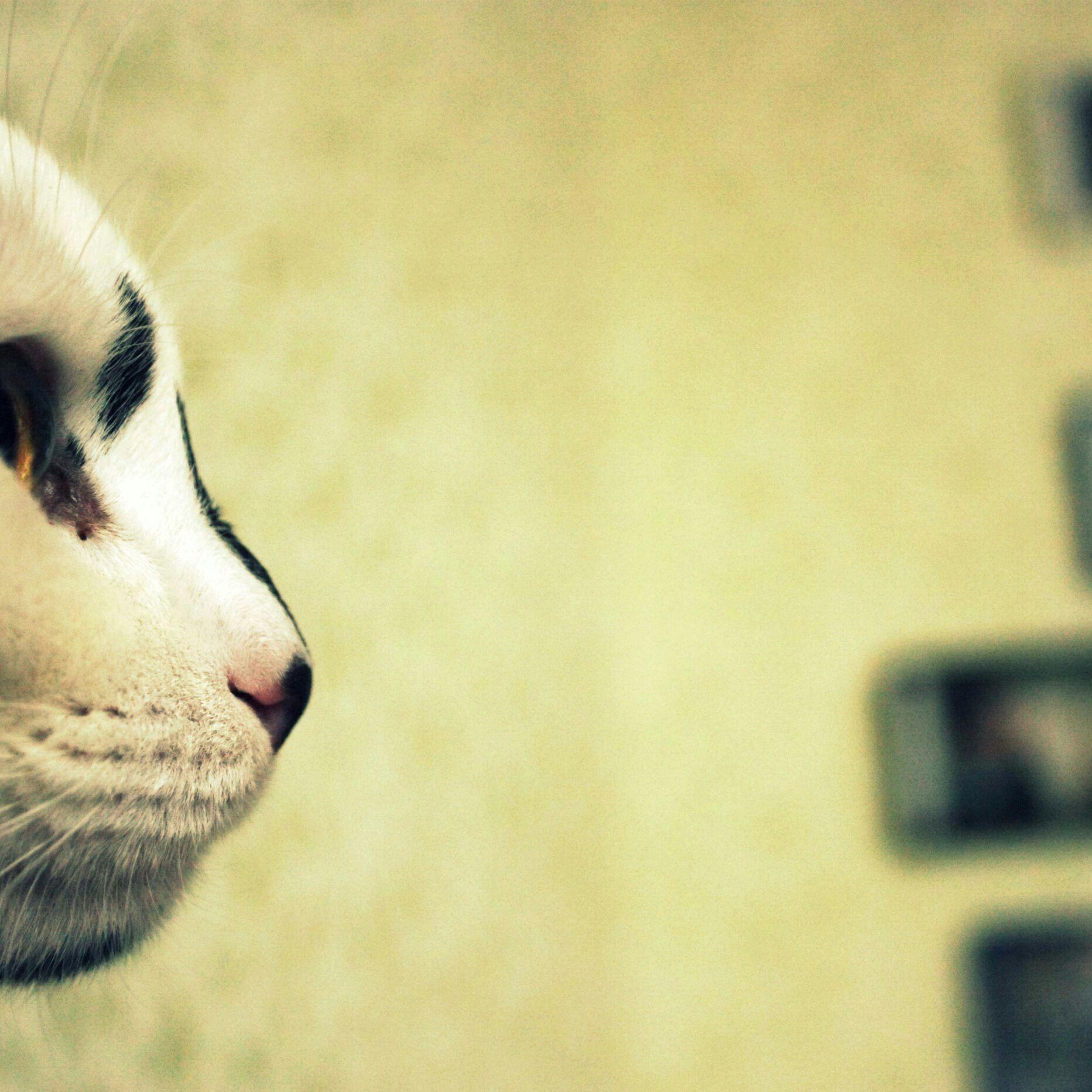 Как сделать кошачью мордочку на фото