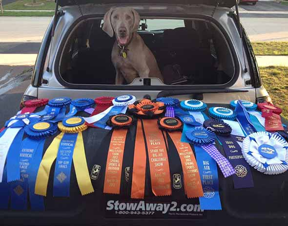 Dog behind StowAway MAX Cargo Carrier displaying his championship ribbons
