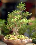 favourite_tree