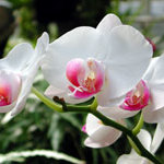 orchid_garden