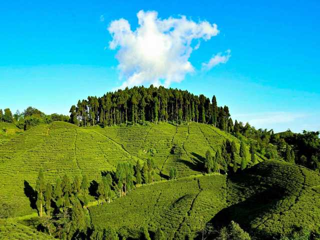 Visit Tea estates Mirik in Mirik