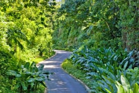 Drive through Apes Hill to Cabbage Tree Green