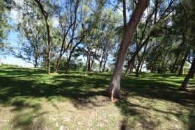 Mature Trees Adjacent