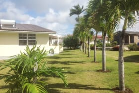 Boundary of the property lined with palm trees