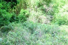 Grenville Vale River Lot