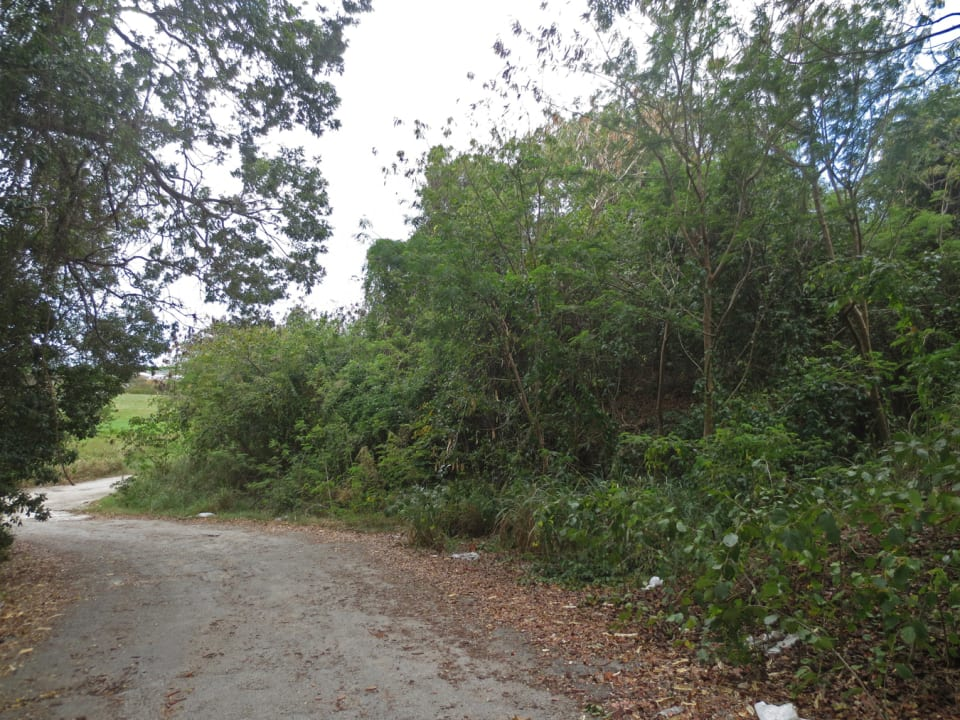 View of lot from side road