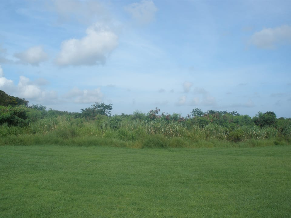View of the land looking east