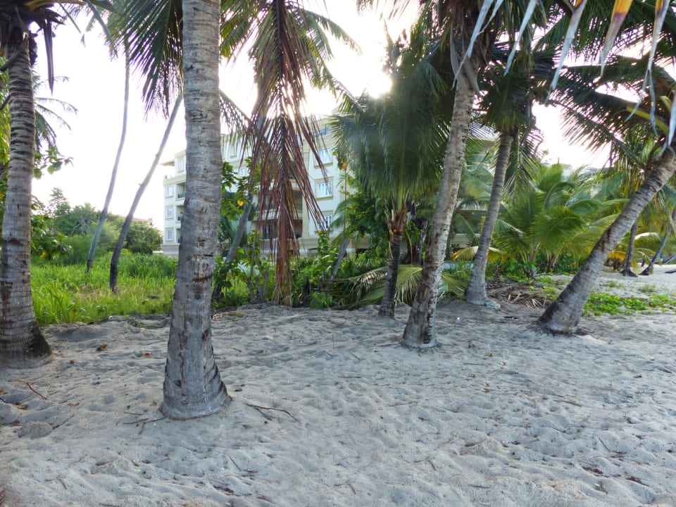 Palm trees at the beachfront