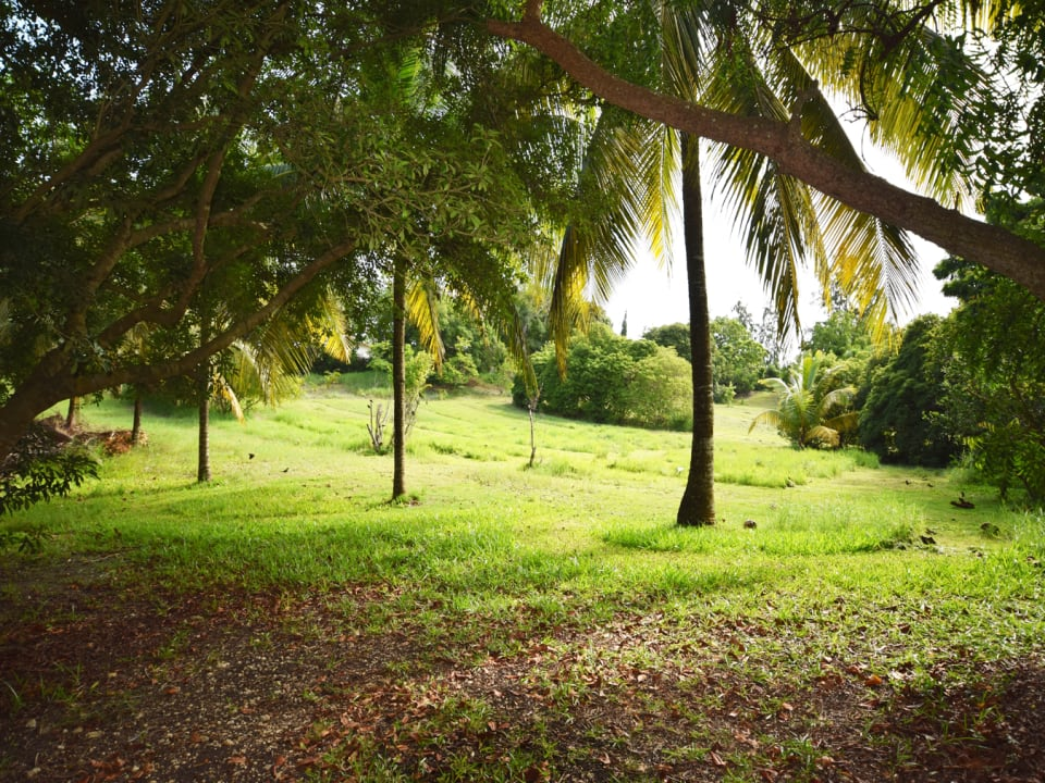 Beautiful grounds with 8 mango trees!