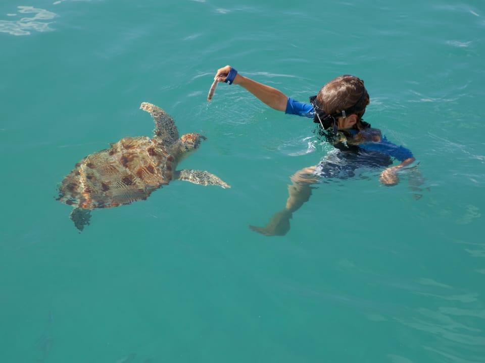 Turtle feeding