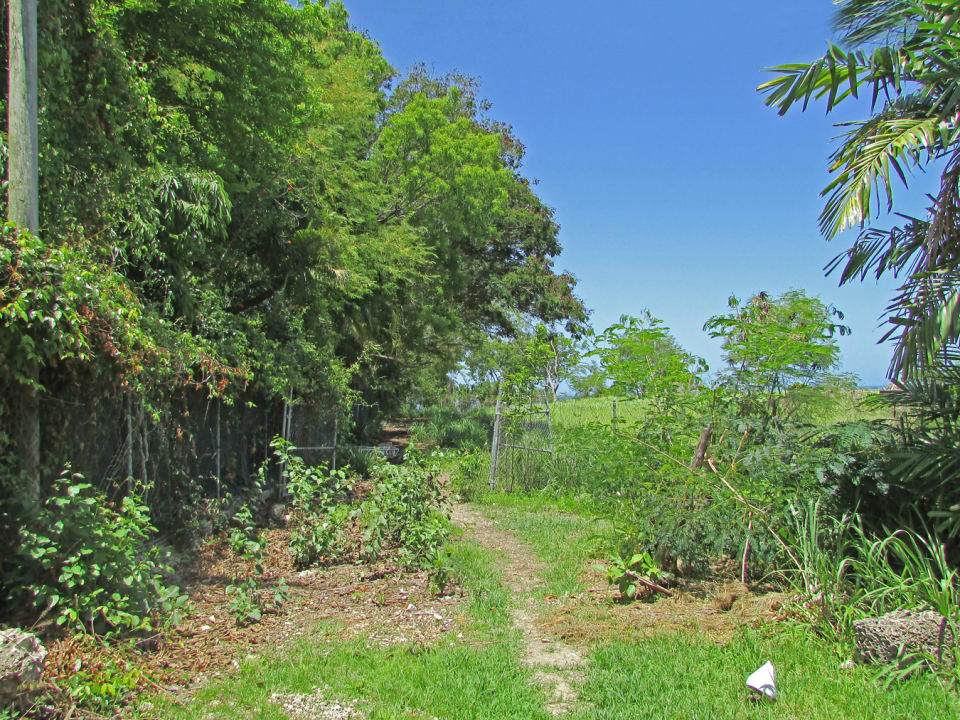 Looking West Across Ridge Lot - Fustic Boundary on left