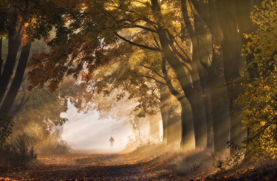Bắt gặp con đường mùa thu đẹp như cổ tích ở xứ Ba Lan mộng mơ