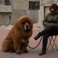 China zoo under fire for disguising a dog as a lion