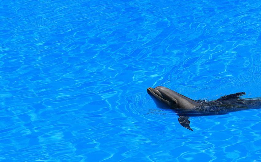 delfin tenerife