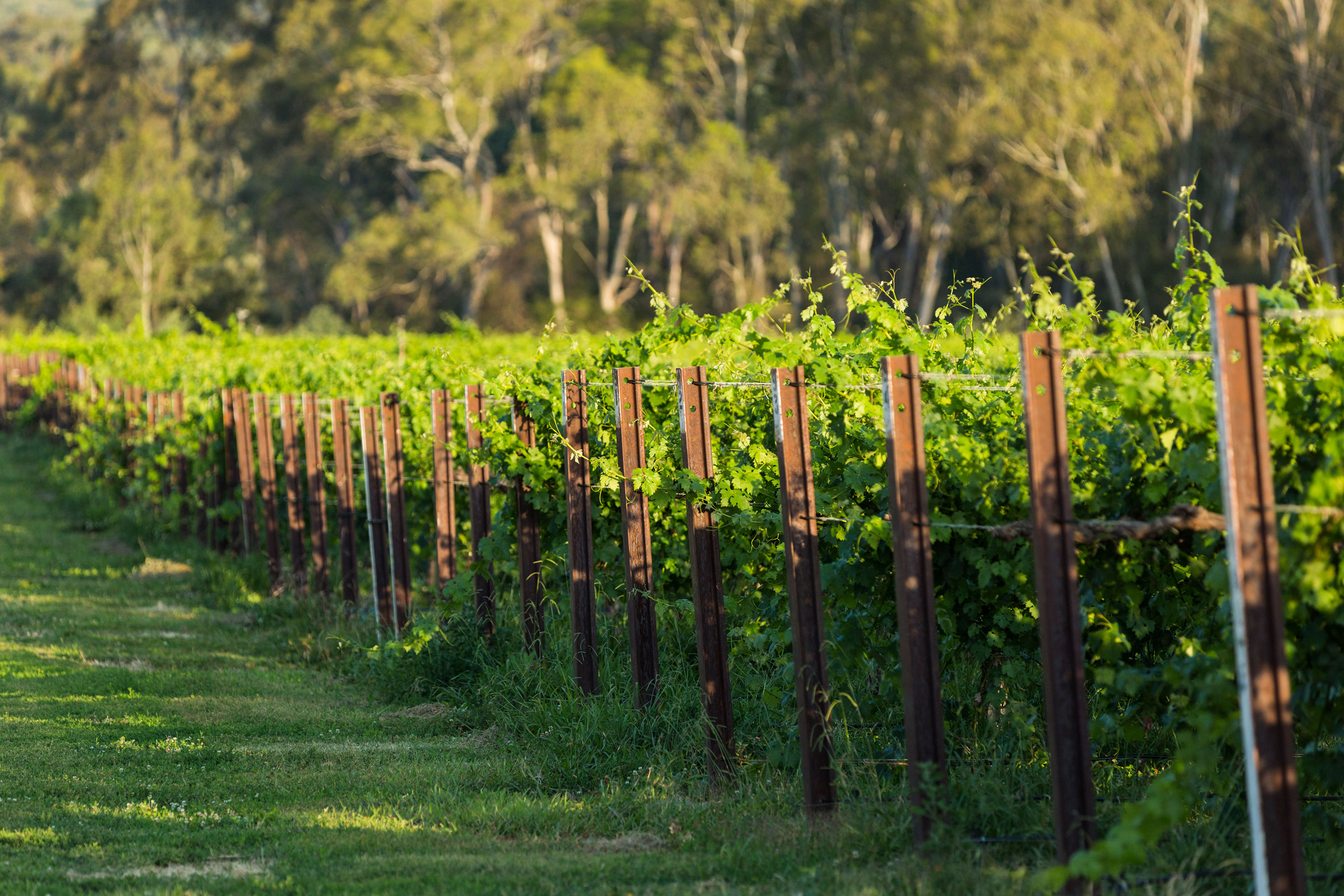 great-southern-wine-trail