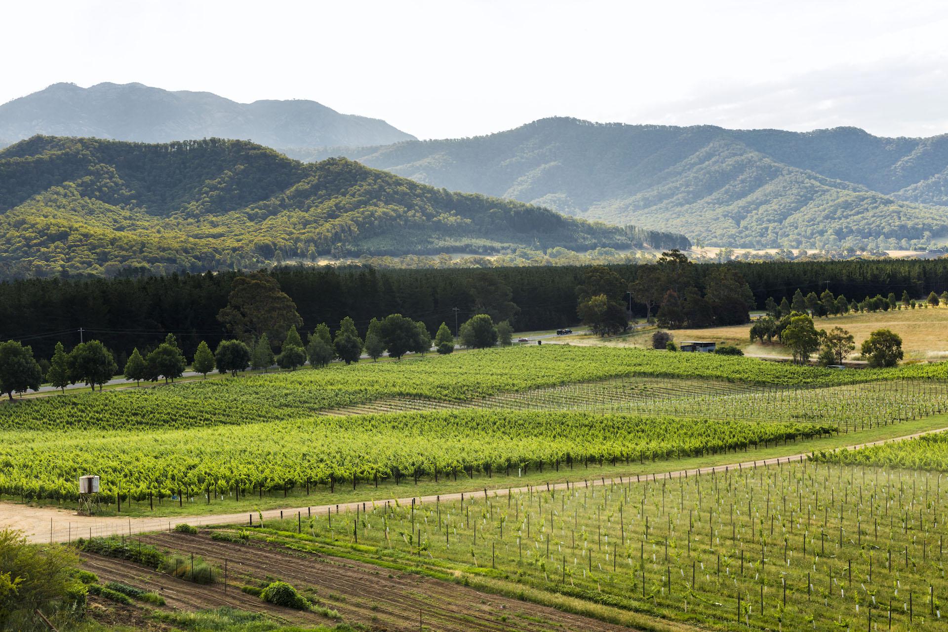 winery aus