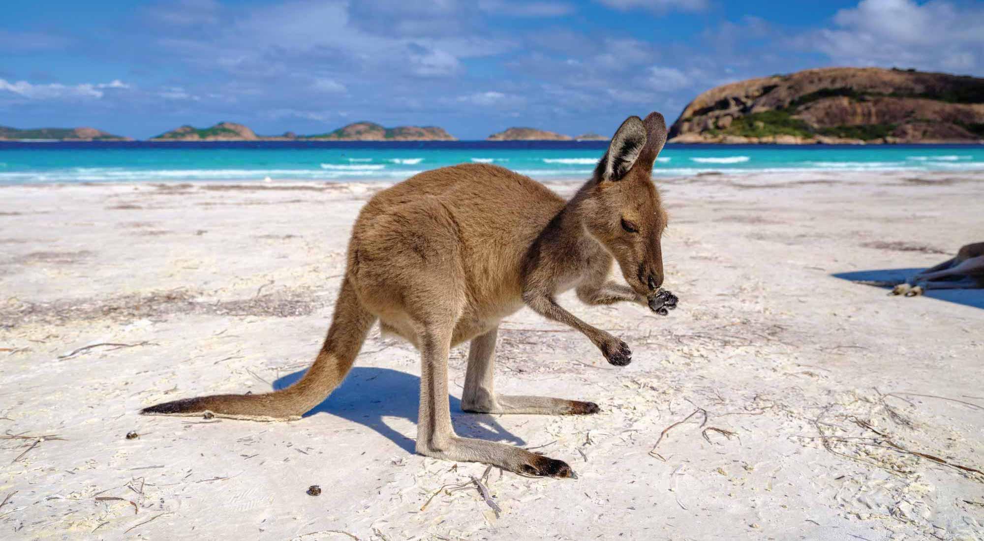 kangoo on beach lucky bay britz campervans