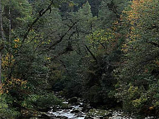 Promenader i naturen