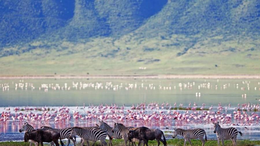 Flamingos and Zebras
